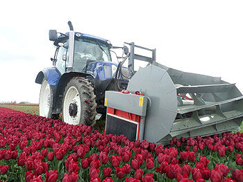 350-Row-Crop-Radial-Tulips-01