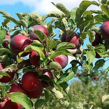 La importación de frutas y hortalizas se mantiene positiva