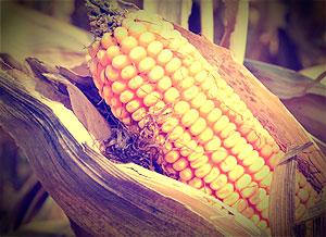 Precios-Cereales-ACCOE-2