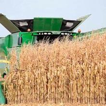 ASAJA prevé que la cosecha de cereales será la segunda más baja en 25 años