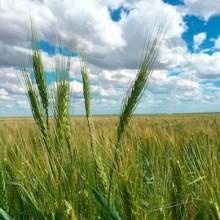 Encuentro Nacional de Operadores de Cereales en FIMA