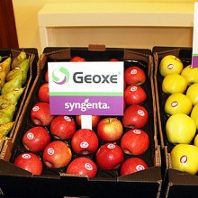 La tecnología Geoxe de Syngenta alarga la vida de la fruta de pepita