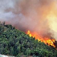 Aprobada la restauración forestal por incendios en Cantabria