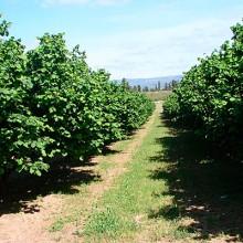 Visita técnica a una plantación de avellanos en Tarragona