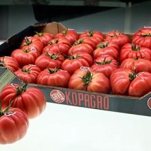 Monterosa, tomate de invierno con sabor tradicional