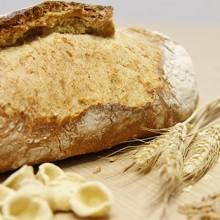 Cecosa Semillas presenta el cereal Tritordeum