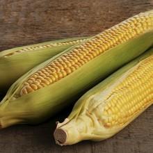 La demanda de maíz a nivel mundial se elevó a cifras récord