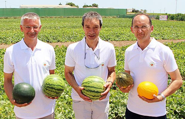 Syngenta-Melon-Sandia-1