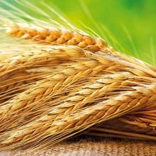 El mes de junio cierra desigual en el mercado de cereales