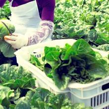 Incremento de los precios de retirada para frutas y hortalizas