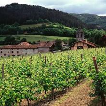 Autorizaciones concedidas para nuevas plantaciones de viñedo