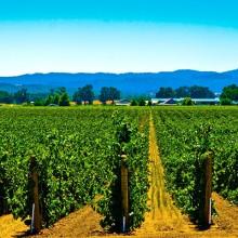 Mejoras en el Programa de Apoyo al Sector Vitivinícola de España