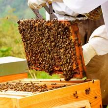 La reducción de la cosecha de miel no reactiva los precios pagados al apicultor