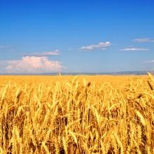 Aprobadas dos normas jurídicas sobre seguros agrarios