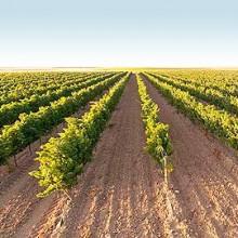 El IRTA premiado por su estudio en Teledetección para el riego en viña