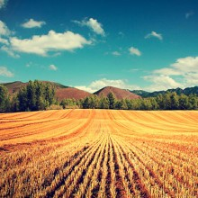 Aprobado el 38º Plan de Seguros Agrarios Combinados