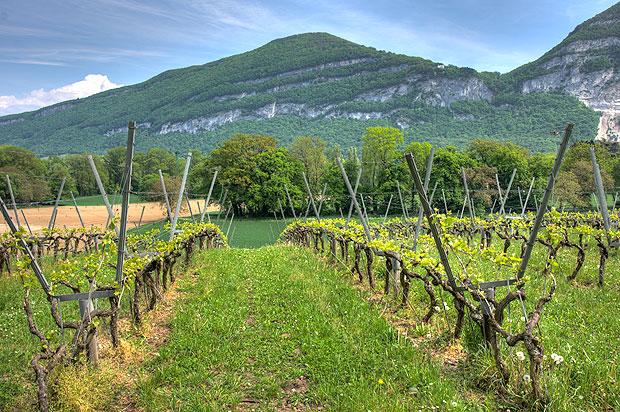 mapama-vitivinicola