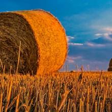 La caída de precios empaña un año récord en la producción agraria
