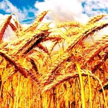 Reducir la volatilidad de los precios agrícolas
