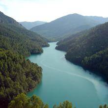 El 21 de marzo, Día Internacional de los Bosques