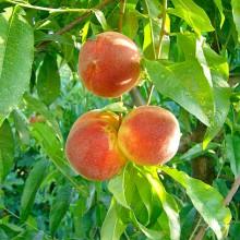Nuevas medidas en frutas y hortalizas frente al veto ruso