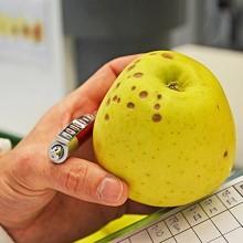 Dos nuevos métodos para predecir el bitter pit en manzana