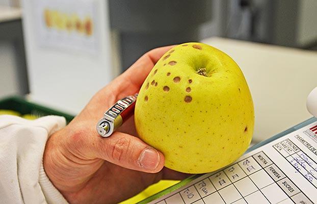 BITTER-PIT-APPLE-manzana-IRTA