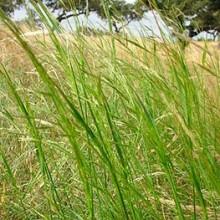 Reconocimiento a la dehesa como pasto permanente