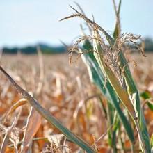 ASAJA solicita al MAPAMA y a las CC.AA. medidas coordinadas para hacer frente a la sequía