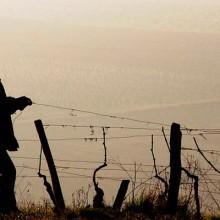 Riesgos laborales y medidas preventivas en viñedo, olivar, cultivos bajo abrigo, ganadería y frutales