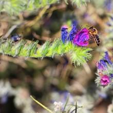 Surinver y Greenyard se unen a la extensión de márgenes de biodiversidad
