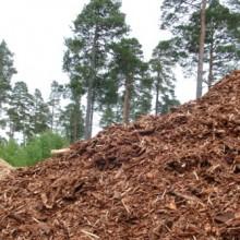 La biomasa evitó la emisión de 3,68 millones de toneladas de CO2 en 2016