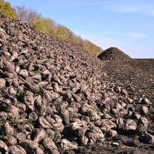 España pierde el 20% de sus hectáreas de remolacha-azucarera y sube un 17% en la UE