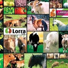 «Lorra Market» apuesta por la transformación digital