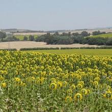 La prohibición del uso de fitosanitarios frena la sostenibilidad agraria
