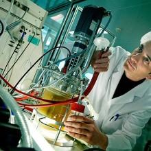 Soluciones biotecnológicas contra las plagas del olivo