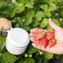 Bosch ayuda a optimizar la gestión de los cultivos