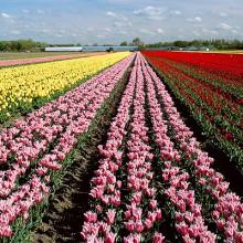 Crece la exportación e importación de flor y plantas vivas hasta octubre