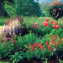 Paysalia, escaparate internacional para las flores y plantas españolas