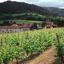 La producción de vino y mosto se sitúa en 49,2 millones de hectolitros