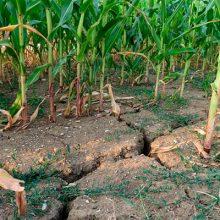 Los regantes hacen frente a la peor sequía de los últimos 20 años