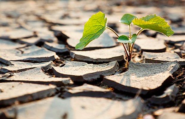 Sequía. Informe UPM
