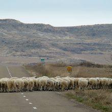 El sector ovino y caprino necesita mayor apoyo de la UE