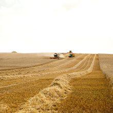Mondelez International amplía su programa de trigo sostenible