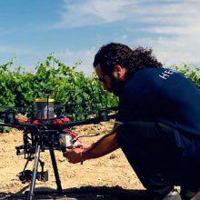 Hemav trabaja con Inteligencia Artificial aplicada al sector vitivinícola