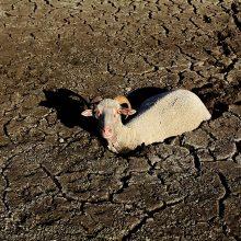 Una tesis propone un seguro basado en indicadores de sequía hidrológica