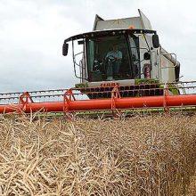 Récord mundial en cultivo de colza con productos Ecoculture