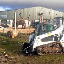 Nueva cargadora de orugas Bobcat T590 para el Project Elephant en un zoo británico