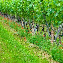 Jornada «Descubriendo el Vino y el Aceite Ecológico»