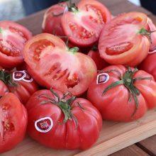 Semillas Fitó organiza una jornada para analizar el valor de las semillas en la cadena agroalimentaria
